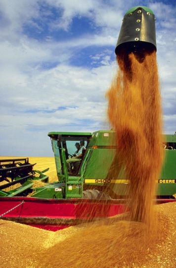 le blé, la récolte
