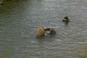 bear, cubs, mom, play, river