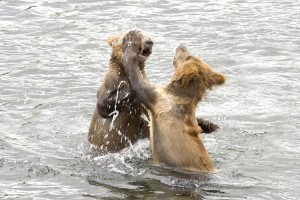 bear, cubs, play, water