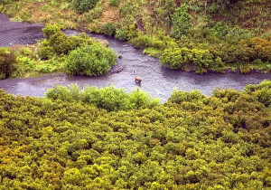 orso bruno, Rusian, fiume
