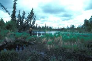 castor, barrage, lac