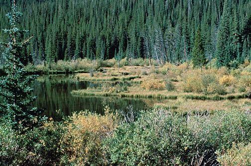 castor, étang, nature