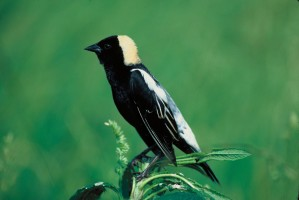 singolo, uccello, seduta, cima, impianto