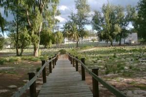 albatross, bonin, petrel, nests, sides, walkway