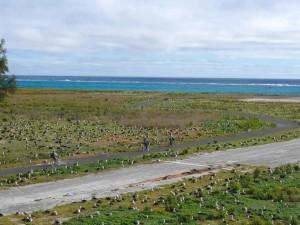 albatross, nest, colony