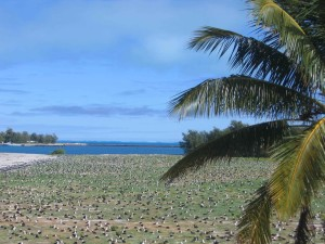 albatross nest, kolonie, zand, eiland, midway, atol, wildernis, toevlucht