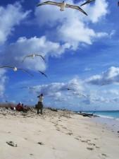 vogels, albatross, vlucht