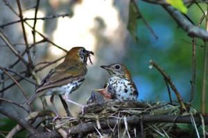 oiseau, famille, nid