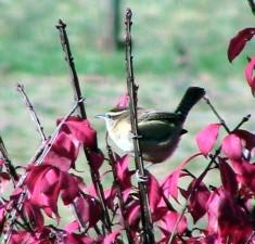 oiseau, buisson