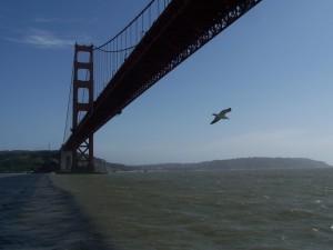 bird, golden, gate, bridge