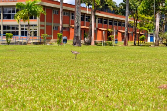 birds, hopping, lawn, front, building