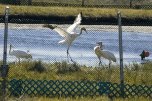 birds, fenced, network