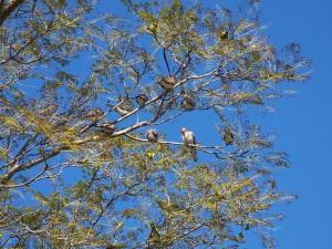 oiseaux, arbre, bleu, ciel