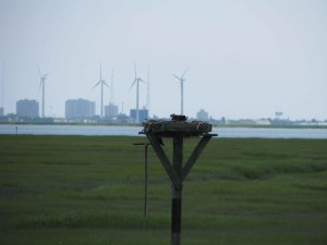 鳥の巣、アトランティック市の海岸線を一望でき、