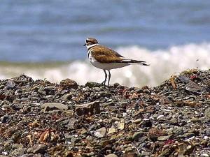 птицы, океан, пляжи