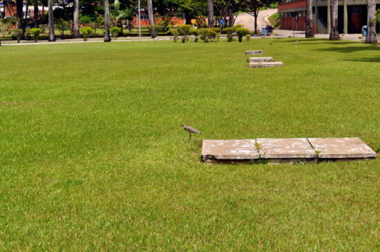 birds, grass, vents