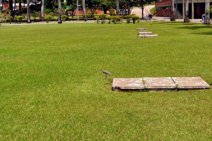 birds, grass, near, vents