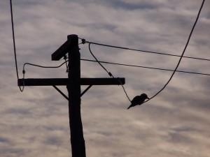 oiseaux, silouhette, puissance, lignes