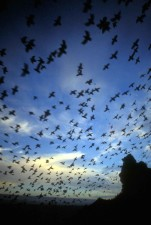 multitud, negras, aves