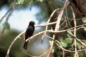 small, black, bird, branch