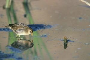 up-close, éretlen, sora, a madár, a takarmányozás, a víz