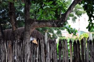 coloré, tropical, oiseau, poteau, clôture