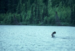 common, loon, mating, display, water