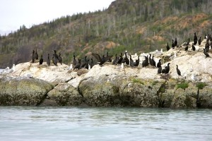 cormorants, sea, rock