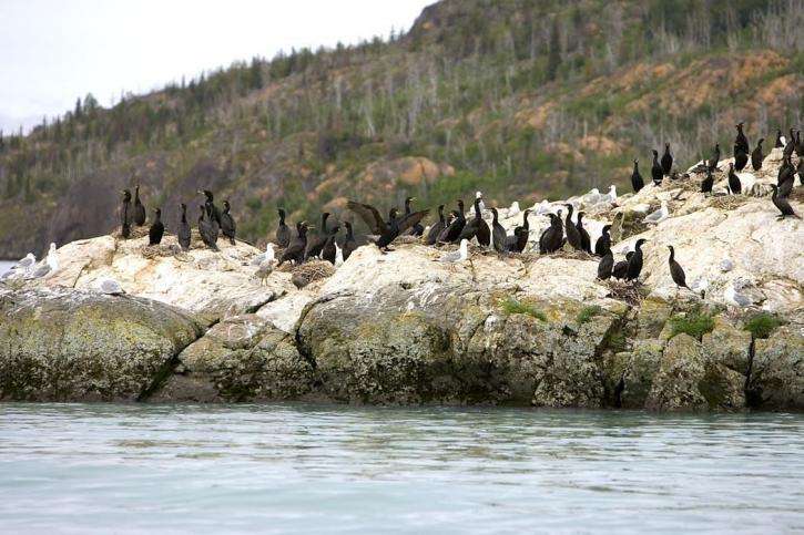 cormoran, mer, rock