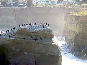 океан води птахів, щоб баклани, хвилі