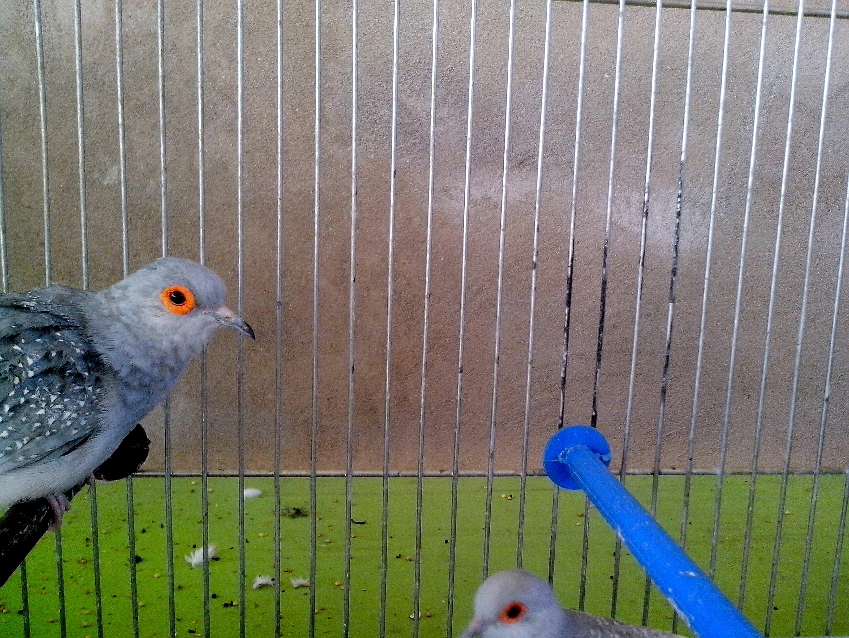 Free photograph; gray, dove, bird, head