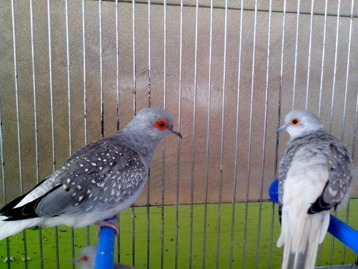 two, decorative, birds, doves
