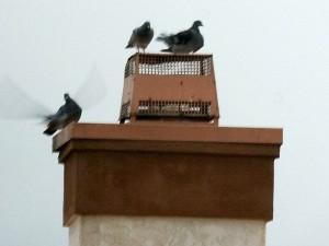 doves, birds