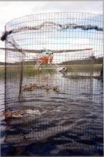 eenden, net, water, vliegtuig, achtergrond