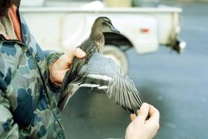 garaney, duck, hands