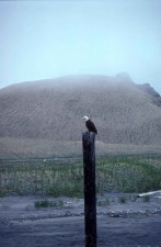 eagle, top, wooden, post, aleutians, andreanof, islands, adak, island