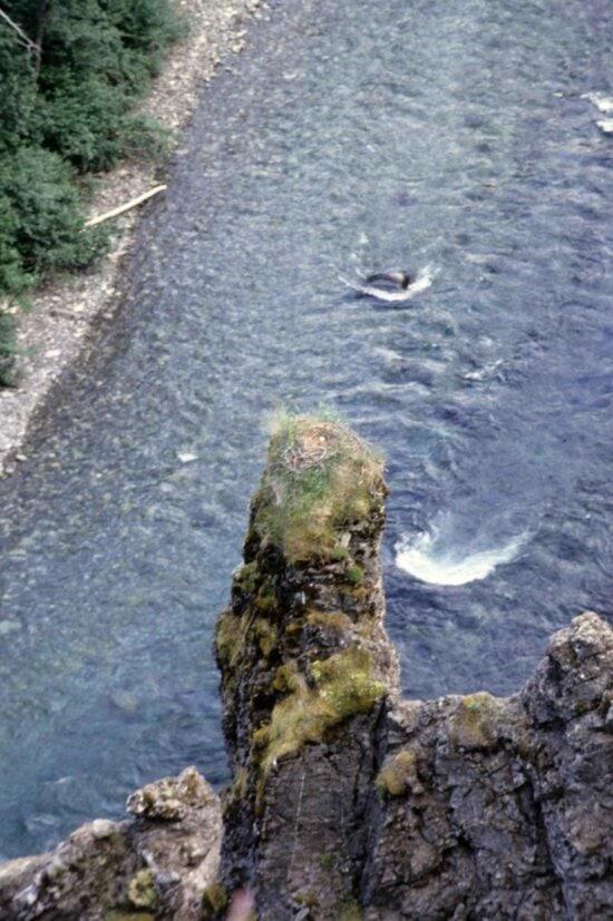 river, eagles, nest