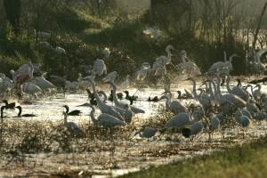 beaucoup, l'eau, les oiseaux, les grandes aigrettes, cormorans, refuge, eaux