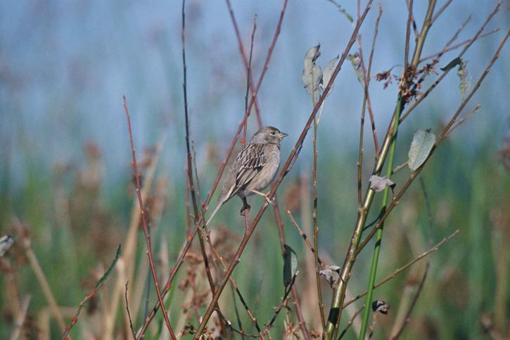Free picture: house, finch, bird, wild, natural habitat ...