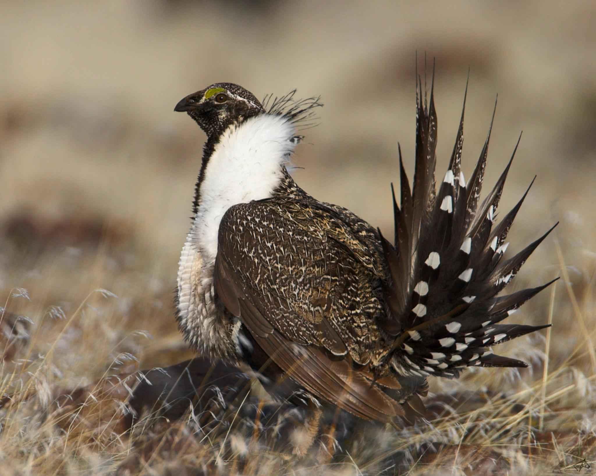 Οι μεγαλύτερες εικόνες πουλί