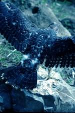 pèlerin, faucon, oiseau, retour