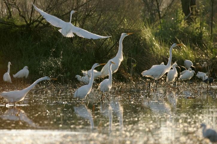 นกกระสา ลี้ภัย รวบรวม น้ำ
