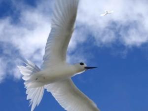 élevé, définition, oiseau, images