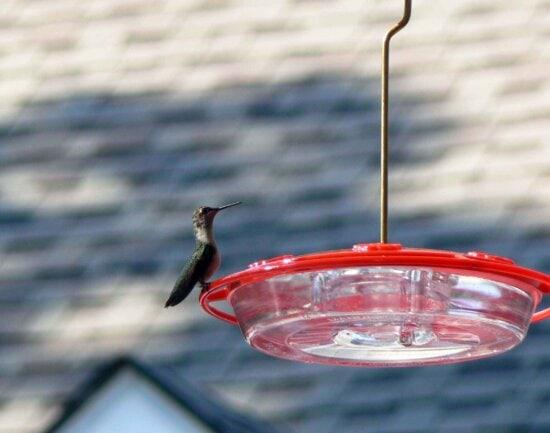 hummingbird, feeder