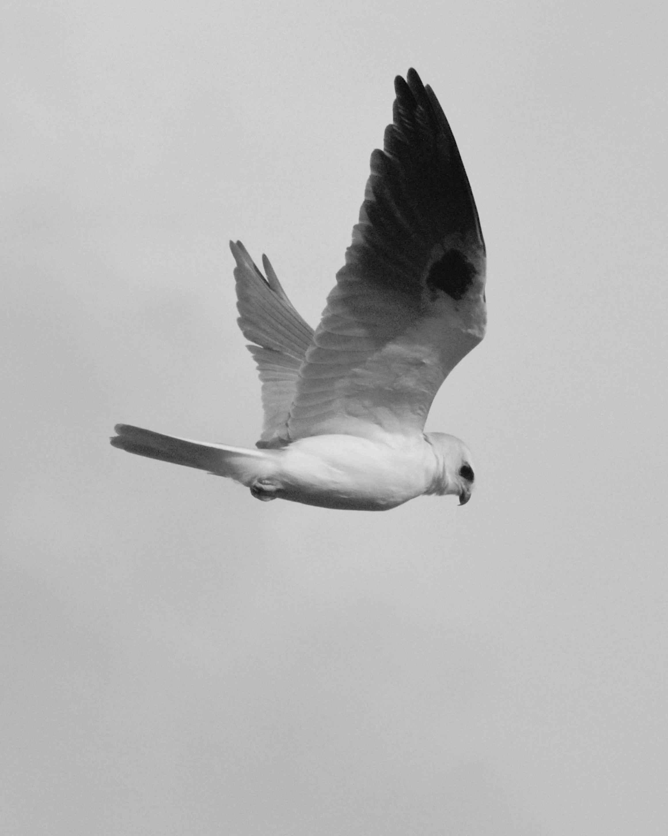 Blackandwhite Warbler  Audubon Field Guide