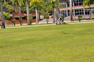Svraka, ptica, let, travnjaka, trava