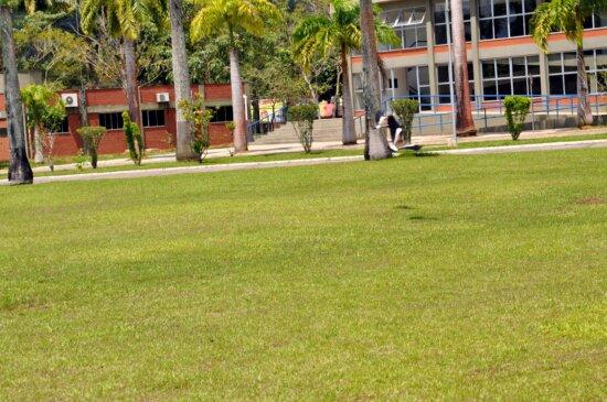 magpie, bird, flight, lawn, grass