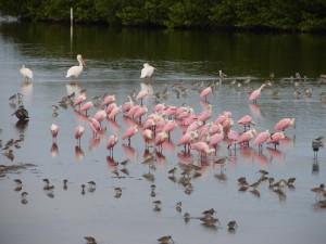many, coastal, birds, feeding, water