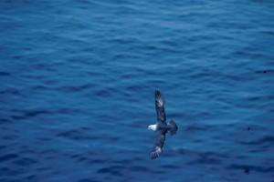 pâle, bleu, plumes, oiseaux, voler, bleu, océan