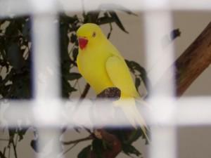 kuş, hapishane